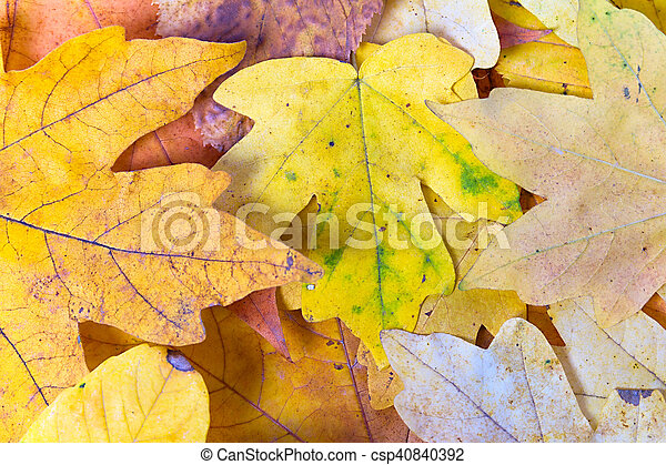 Background of autumn yellow leaves - csp40840392