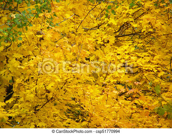 Background of autumn yellow leaves - csp51770994