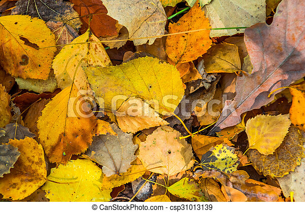 Background of autumn yellow leaves - csp31013139