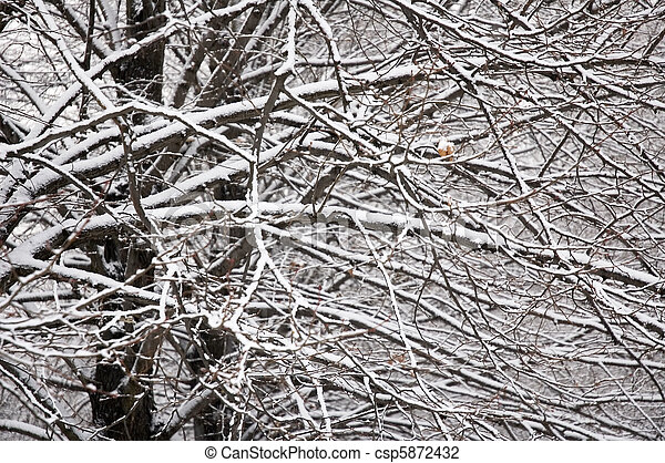 background of branches covered with snow - csp5872432