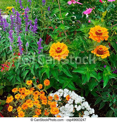 background of bright garden flowers - csp49663247