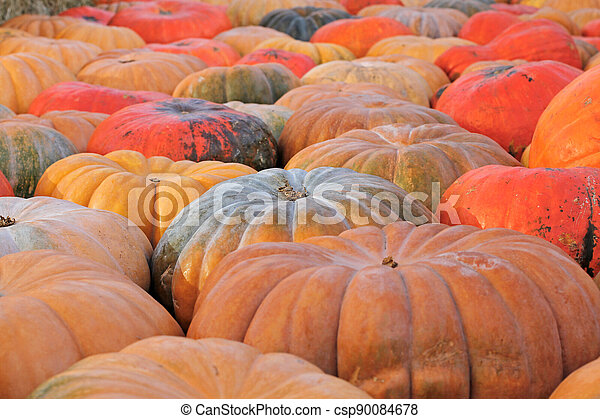 Background of colorful pumpkins at autumn festival - csp90084678