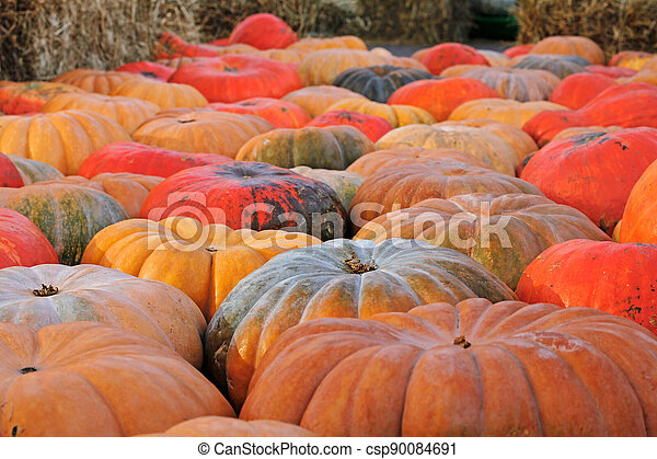 Background of colorful pumpkins at autumn festival - csp90084691