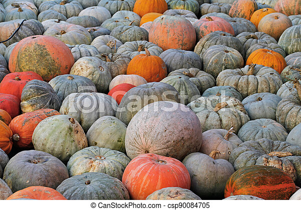 Background of colorful pumpkins at autumn festival - csp90084705