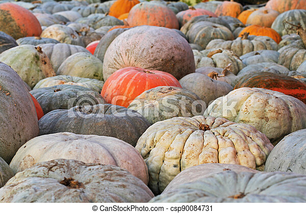 Background of colorful pumpkins at autumn festival - csp90084731