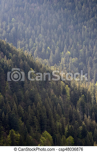 Background of forest with coniferous trees - csp48036876