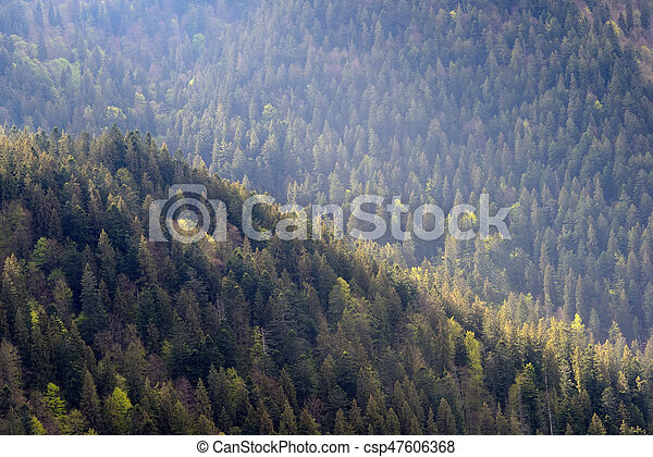 Background of forest with coniferous trees - csp47606368