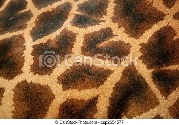 Background of giraffe skin pattern macro - csp2654577