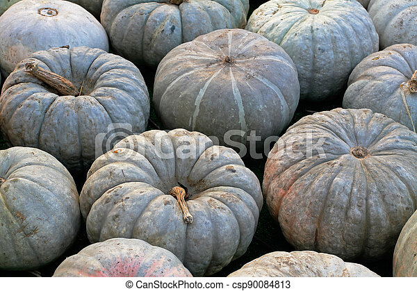 Background of green pumpkins at autumn festival - csp90084813
