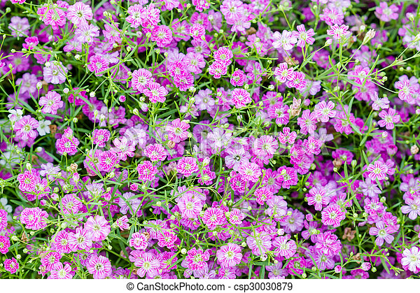 Background of little pink flowers blooming bush background of little pink flowers blooming bush csp30030879 mightylinksfo