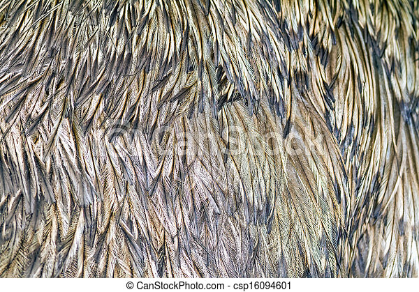 background of ostrich feathers - csp16094601