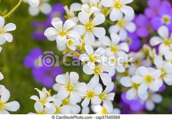 Background Of Purple And White Flowers Background Of Small Purple