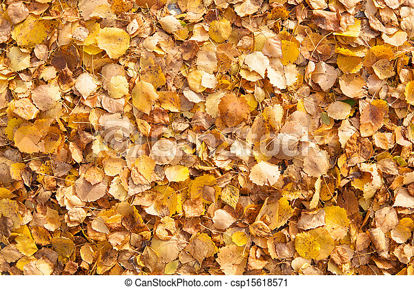 Background of yellow autumn leaves - csp15618571