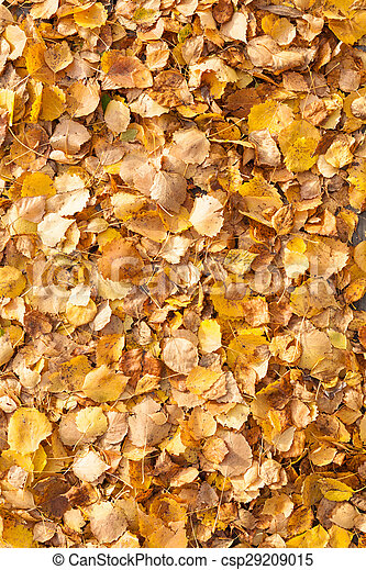 Background of yellow autumn leaves - csp29209015