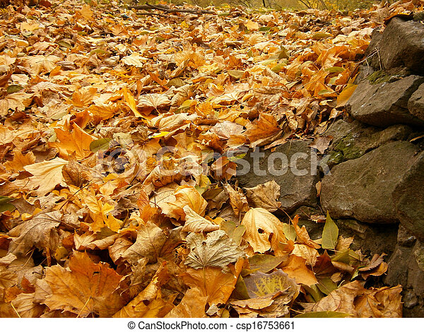 Background of yellow autumn leaves - csp16753661