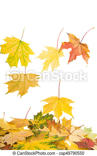 Background of yellow autumn leaves - csp49790550