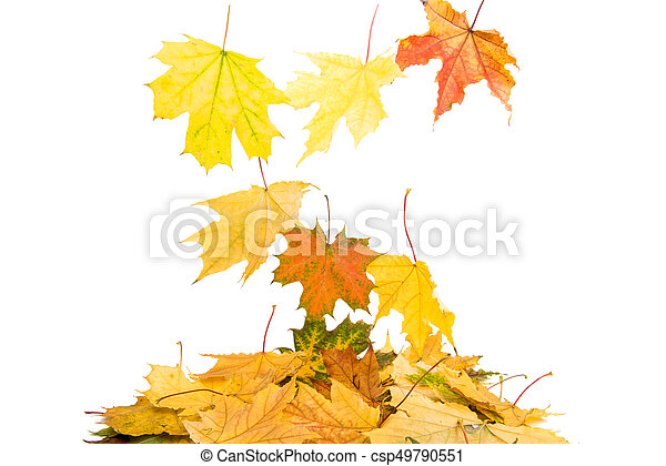 Background of yellow autumn leaves - csp49790551