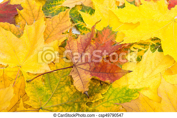 Background of yellow autumn leaves - csp49790547