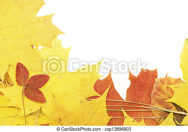 background of yellow autumn leaves - csp13896803