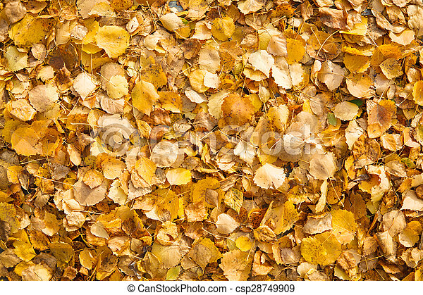 Background of yellow autumn leaves - csp28749909