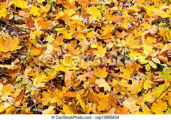 background of yellow autumn leaves - csp13895634