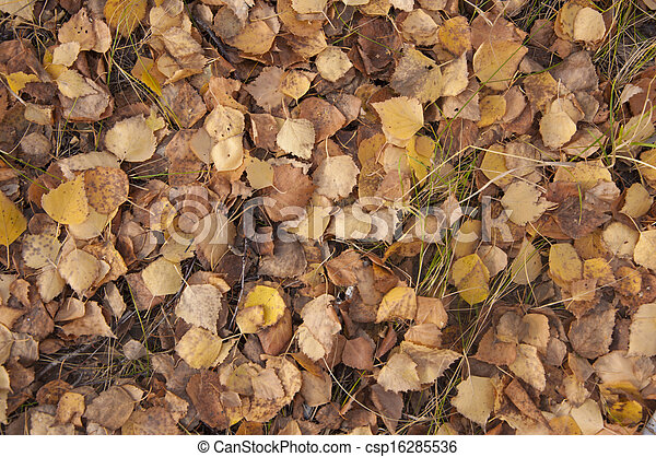background of yellow autumn leaves - csp16285536