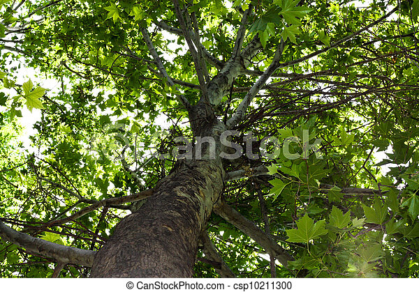 background on the nature of the tree - csp10211300