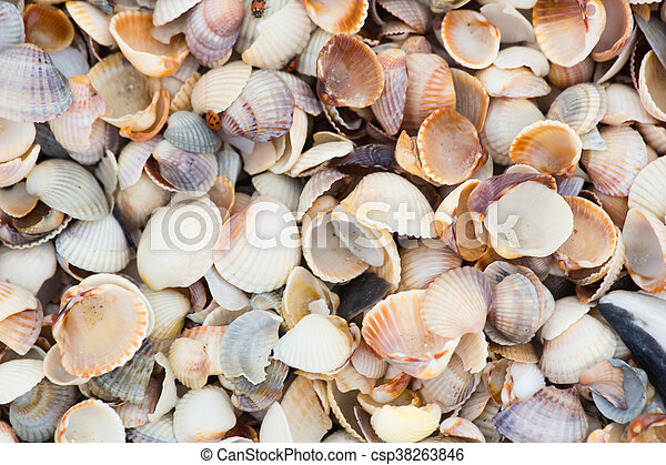 Background Shell beach - csp38263846