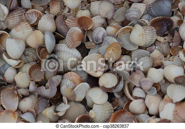 Background Shell beach - csp38263837