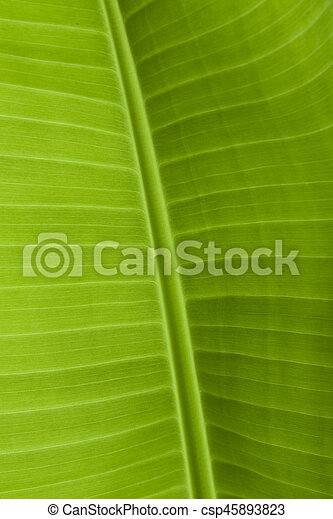 Background texture of banana leaf for your design - csp45893823