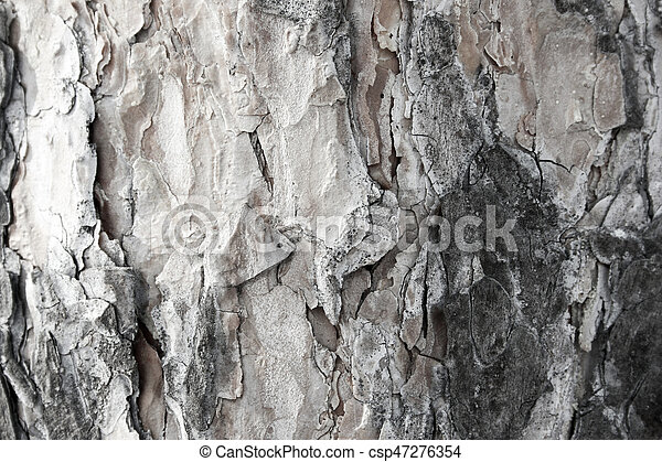Background texture. Photo for your design. - csp47276354
