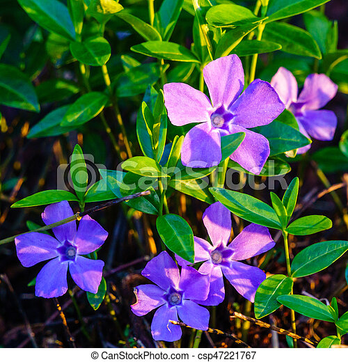 Background With Beautiful Wild Flowers Outside In The Park At Spring