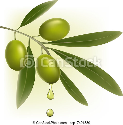 background with green fresh olives. Vector illustration. - csp17491880