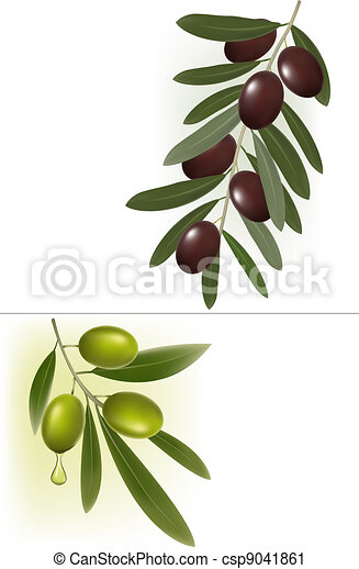 Background with green olives. - csp9041861