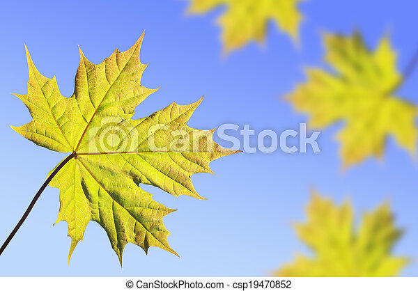 Background with maple leaves - csp19470852