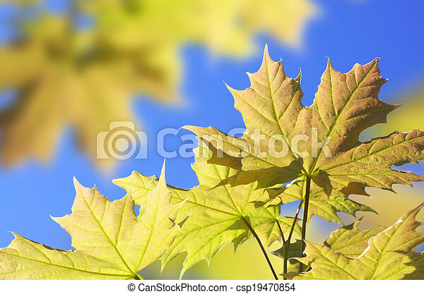 Background with maple leaves - csp19470854