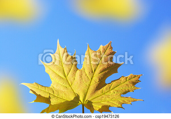 Background with maple leaves - csp19473126