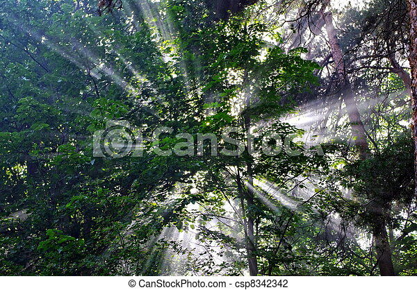 Background with rays of sun in the forest - csp8342342