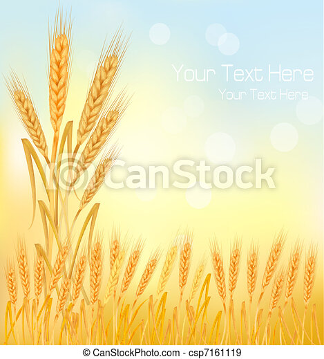 Background with ripe yellow wheat e - csp7161119