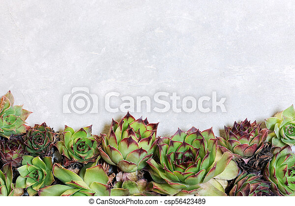 background with succulent plants - csp56423489