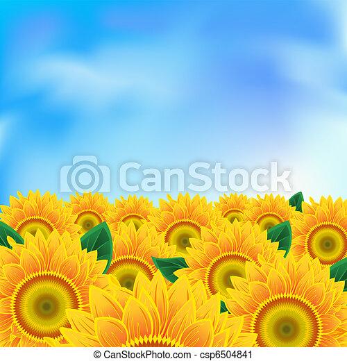 Background with sunflower - csp6504841
