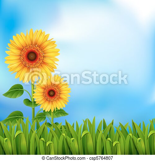 Background with sunflowers - csp5764807
