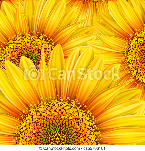 Background with sunflowers - csp5706101