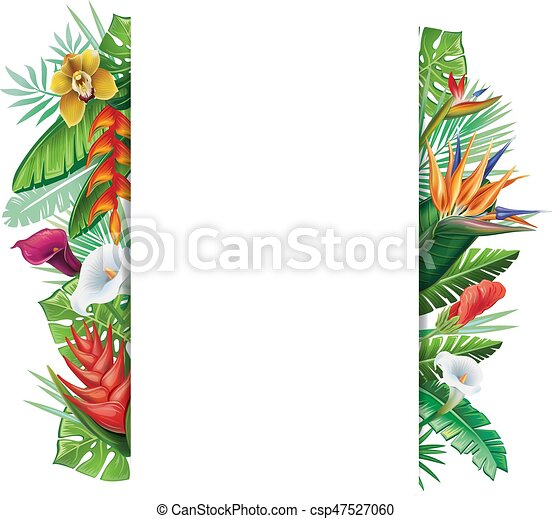 Background with tropical plants - csp47527060