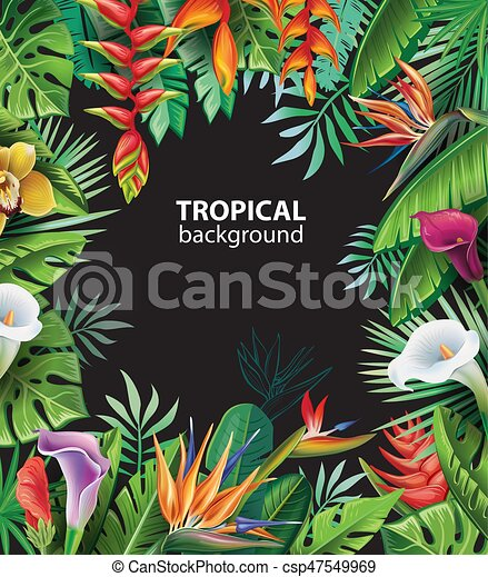 Background with tropical plants - csp47549969