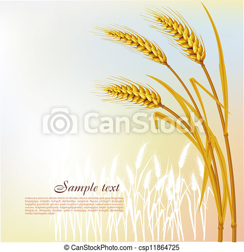 Background  with wheat - csp11864725