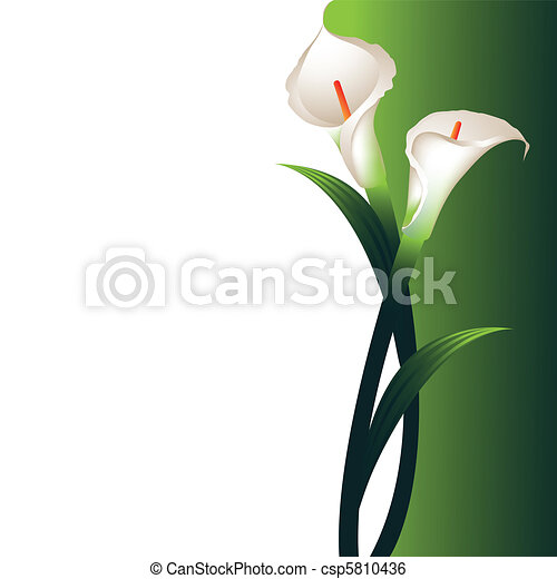 Background with White Callas - csp5810436