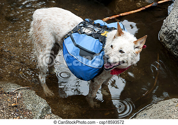 Backpacking Dog - csp18593572