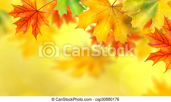 backround with autumn leaves background with autumn leaves header