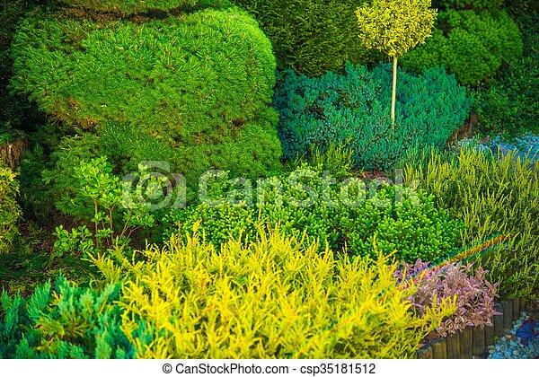 Backyard Garden Closeup - csp35181512